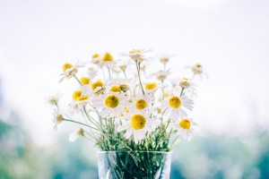 fresh cut flower pepagora
