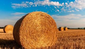 straw-bales-726976_960_720